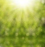 Grün unscharfer Hintergrund Lizenzfreies Stockfoto