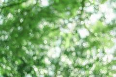 Grün unscharfer Hintergrund Stockfoto