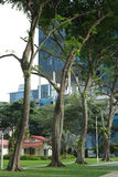 Grün unter konkretem Dschungel Stockfoto