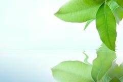 Grün verlässt Überwasser Stockfoto