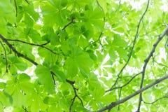 Grün verlässt auf einem Hintergrund der Sonne von Lizenzfreies Stockfoto