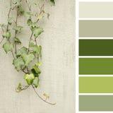 Grün verlässt auf einer Wand, mit Farbpalette Lizenzfreies Stockfoto