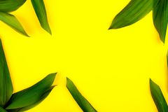 Grün verlässt auf gelbem Hintergrund, flache Lage, Spitze, Ansicht, schlagkräftiger Pastell, Duoton Stockfotografie