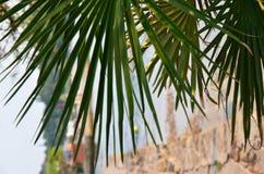 Grün verlässt auf Steinen Hintergrund, Sommer, Hintergrund einer weißen Runde Lizenzfreie Stockfotografie