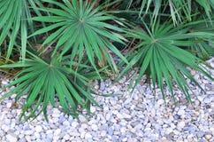 Grün verlässt auf Steinen Hintergrund, Sommer, Hintergrund einer weißen Runde Stockfotografie