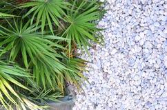 Grün verlässt auf Steinen Hintergrund, Sommer, Hintergrund einer weißen Runde Lizenzfreies Stockfoto