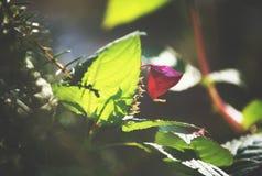 Grün verlässt im Sonnenlicht Stockfoto