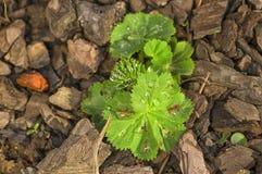 Grün verlässt mit Tropfen des Taus oder des Regens auf dem Hintergrund von ston Stockfotografie