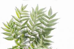 Grün verlässt mit weißem Hintergrund, Aquarelleffekt vektor abbildung
