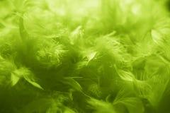 Grün versieht Hintergrund - Foto auf Lager mit Federn Lizenzfreie Stockfotografie