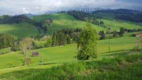 Grün von der Schweiz Lizenzfreies Stockbild