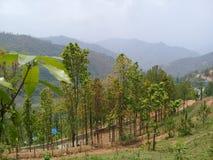 Grün von Nepal Lizenzfreies Stockfoto