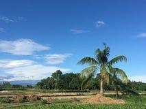 Grün von Nepal Stockbilder