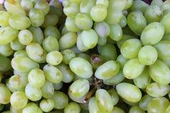 Grün-weiße reife Trauben bereit gegessen zu werden Stockfotografie