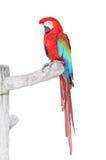 Grün Wings Macaw mit Ausschnittspfad Lizenzfreie Stockfotos