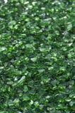 Grün zerquetschtes Glas Stockfotografie