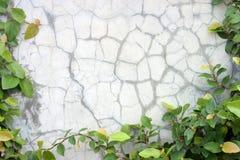 Grünblätter über Bodenhintergrund Stockbild