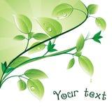 Grünblätter lizenzfreie abbildung