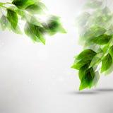 Grünblätter Lizenzfreie Stockfotos