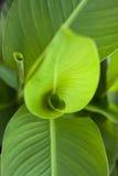 Grünblätter Stockfotografie