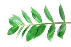 Grünblätter Stockfoto