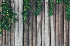 Grünblätter auf dem alten hölzernen Hintergrund lizenzfreie stockfotos