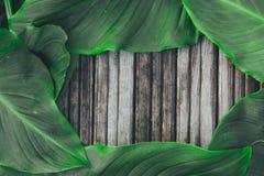 Grünblätter auf dem alten hölzernen Hintergrund stockfoto