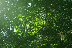 Grünblätter auf dem Baum Stockfotos