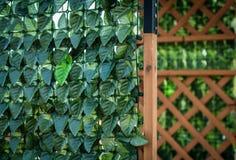 Grünblätter auf dem Bretterzaun Stockbilder