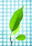 Grünblätter auf den Hintergrundlichtern Stockfotos