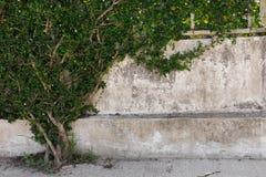 Grünblätter auf der Wand stockfotografie