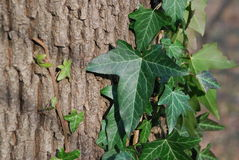 Grünblätter auf einem Baum stockbild