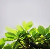 Grünblätter auf einem hellen Hintergrund stockbild