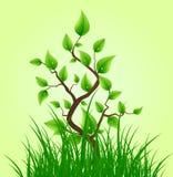 Grünblätter auf kleinem Baum Stockbilder