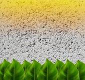 Grünblätter auf konkretem Hintergrund mit Blendenfleck Stockbild