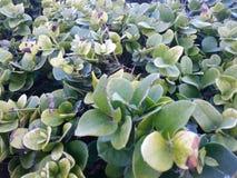 Grünblätter auf Morgen Stockbilder