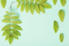Grünblätter auf Papierhintergrund Stockfoto
