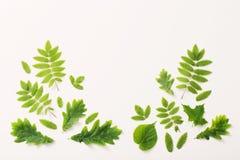 Grünblätter auf Papierhintergrund Lizenzfreie Stockbilder