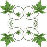 Grünblätter auf weißem Hintergrund. Stockbild