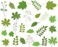 Grünblätter auf weißem Hintergrund, Laub stock abbildung