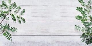 Grünblätter auf weißem Weinleseholz Stockfotografie