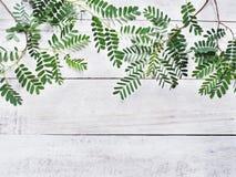 Grünblätter auf weißem Weinleseholz Stockbilder