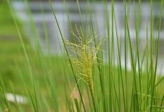 Grünblätter, bedecken abstrakten Natur-Hintergrund mit Gras Lizenzfreie Stockfotos