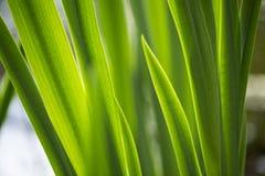 Grünblätter belichtet durch die Sonne Stockfotografie