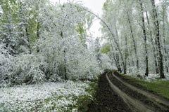 Grünblätter der Bäume und des Grases bedeckt mit Schnee Stockbild