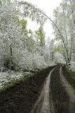 Grünblätter der Bäume und des Grases bedeckt mit Schnee Lizenzfreie Stockfotografie