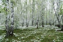 Grünblätter der Bäume und des Grases bedeckt mit Schnee Lizenzfreie Stockfotos