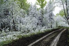 Grünblätter der Bäume und des Grases bedeckt mit Schnee Stockfoto