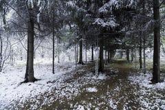Grünblätter der Bäume und des Grases bedeckt mit Schnee Lizenzfreies Stockfoto