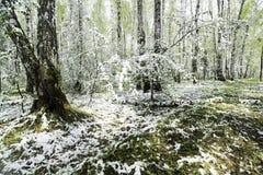 Grünblätter der Bäume und des Grases bedeckt mit Schnee Lizenzfreies Stockbild